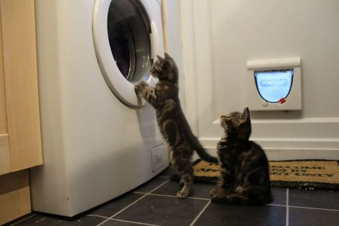 Любимое занятие у котят