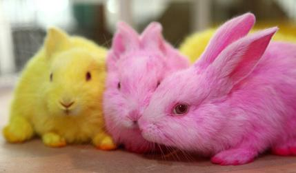 Speedy The Cheeky House Bunny Pet Dyes And Rabbits Is It
