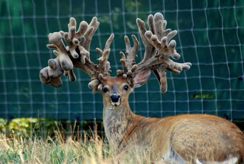 Welcome to Animal Cognizance: Unusual Photographs of Deer