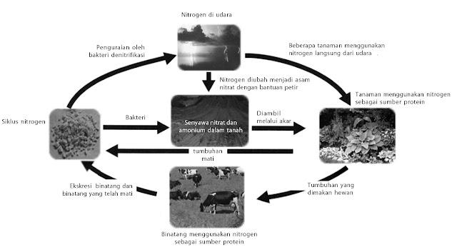 Siklus nitrogen di udara