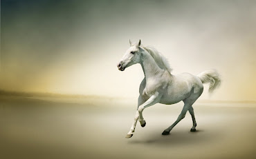 #14 Horse Wallpaper