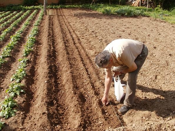 Viveros puente del retamar siembra y plantaci n for Definicion de vivero