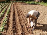 siembra y plantación Siembre+surcos