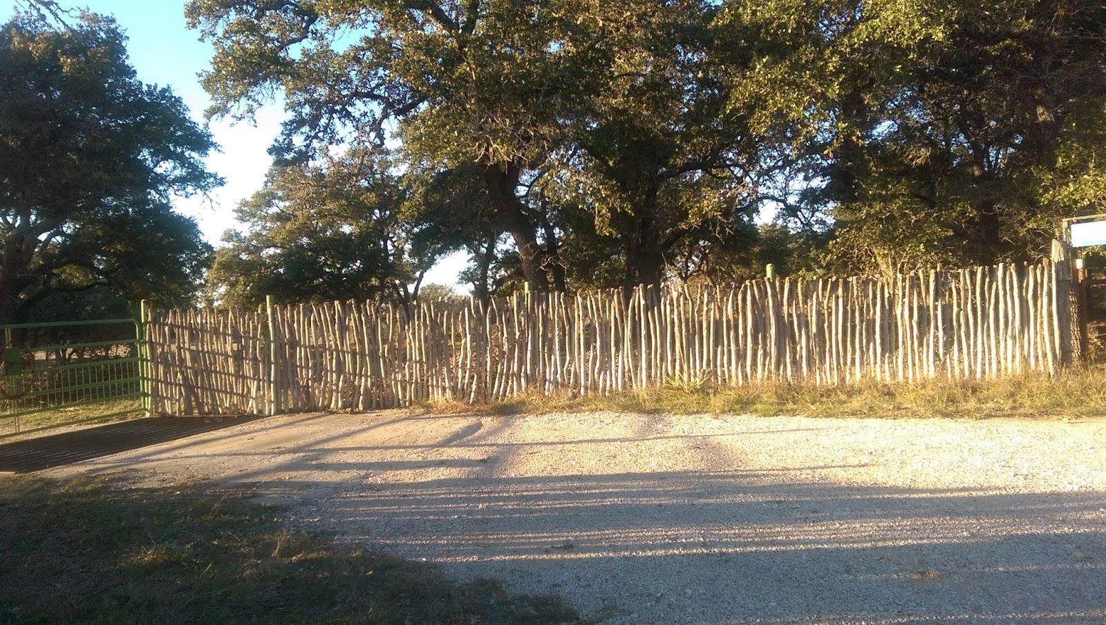 Gardening at Draco: Cactus Fence