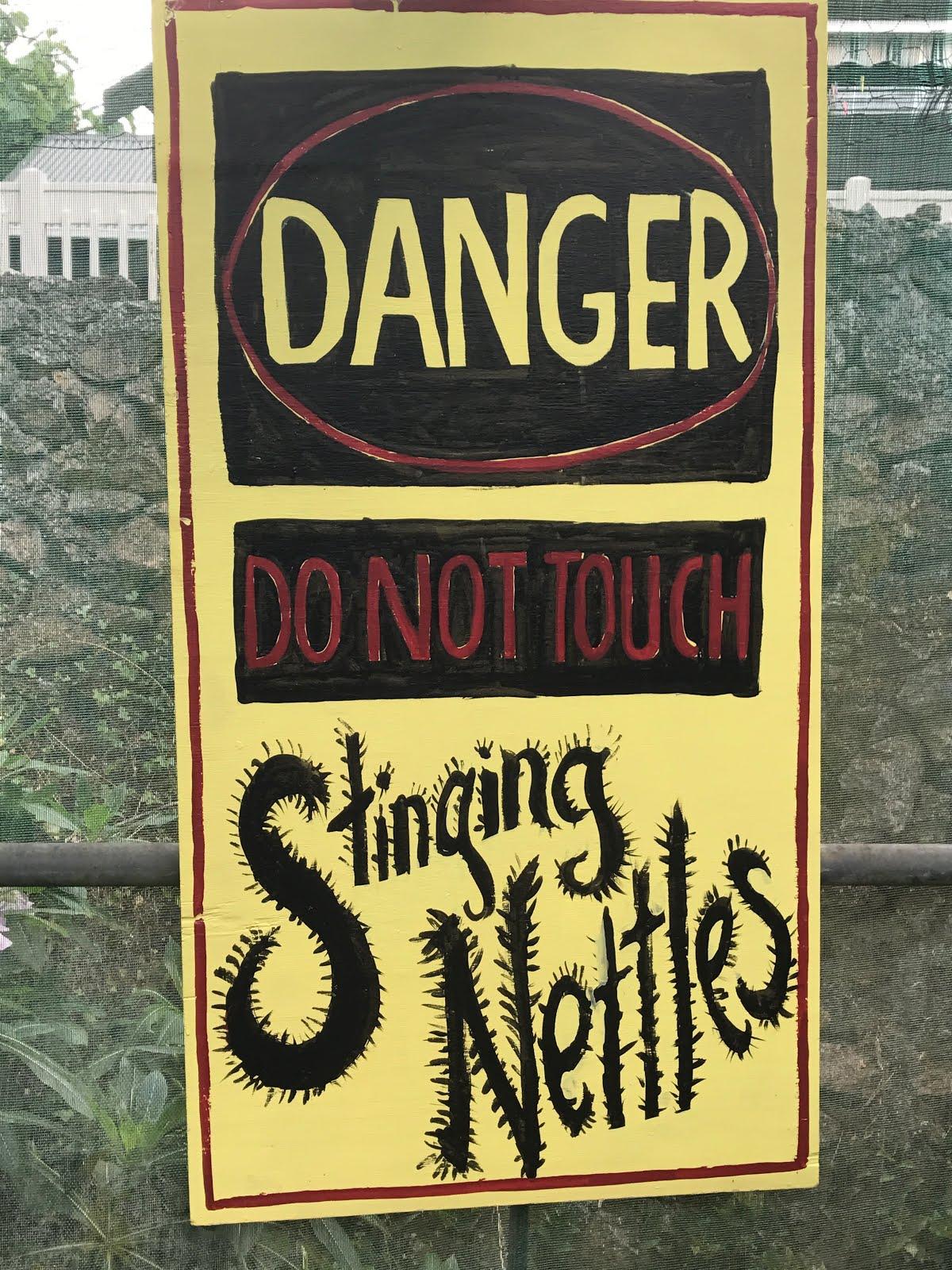 Stinging Nettles