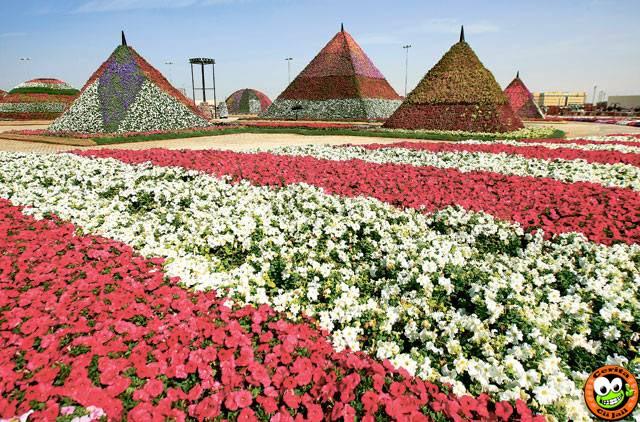 Dubai Miracle Garden, Taman Bunga Terbesar Di Dunia