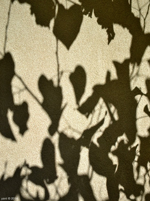 leaf shadows