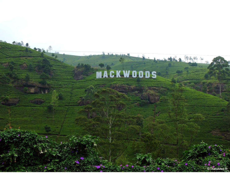Plantations de thé Sri-Lanka Mackwood colline Hollywood