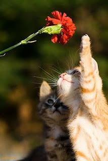 kucing comel5 Gelagat Si Comel