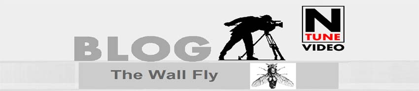 The Wall Fly
