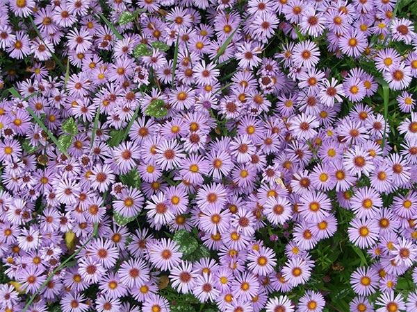 terindah di dunia sangat cocok sekali dengan foto bunga terindah di ...