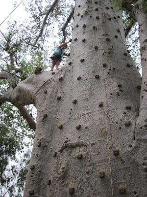 IMG_3338 ▷ La Reserva de Bandia y Accro Baobab Adventures