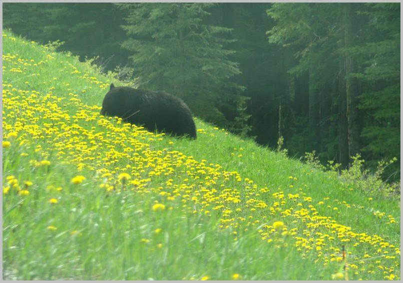 Frühling, Zeit der Bären