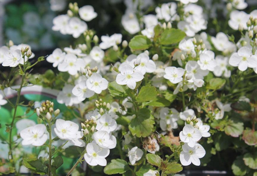 Rose petal nursery business plan