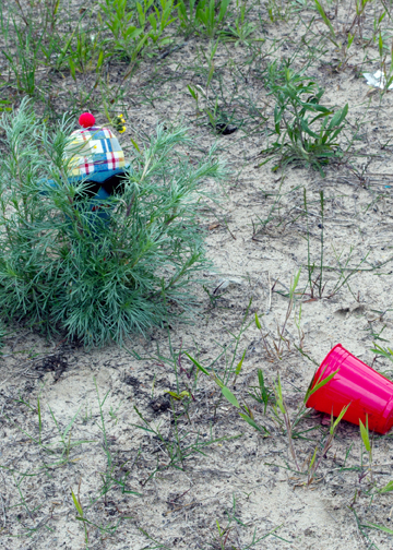 Tonka Wonka disapproves of litter on the North Bay side of North Beach Provincial Park.