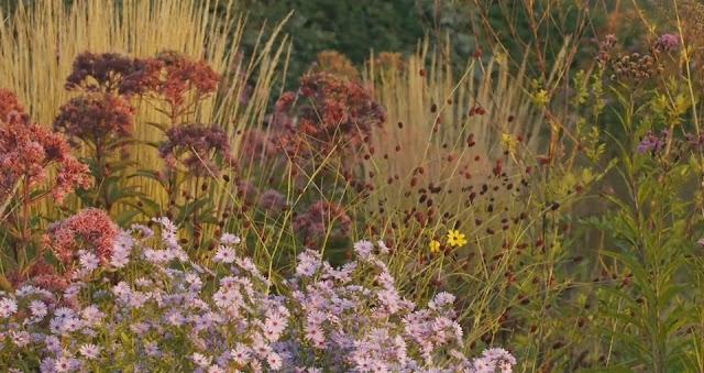 Jardín de perennes del estudio de Piet Oudolf