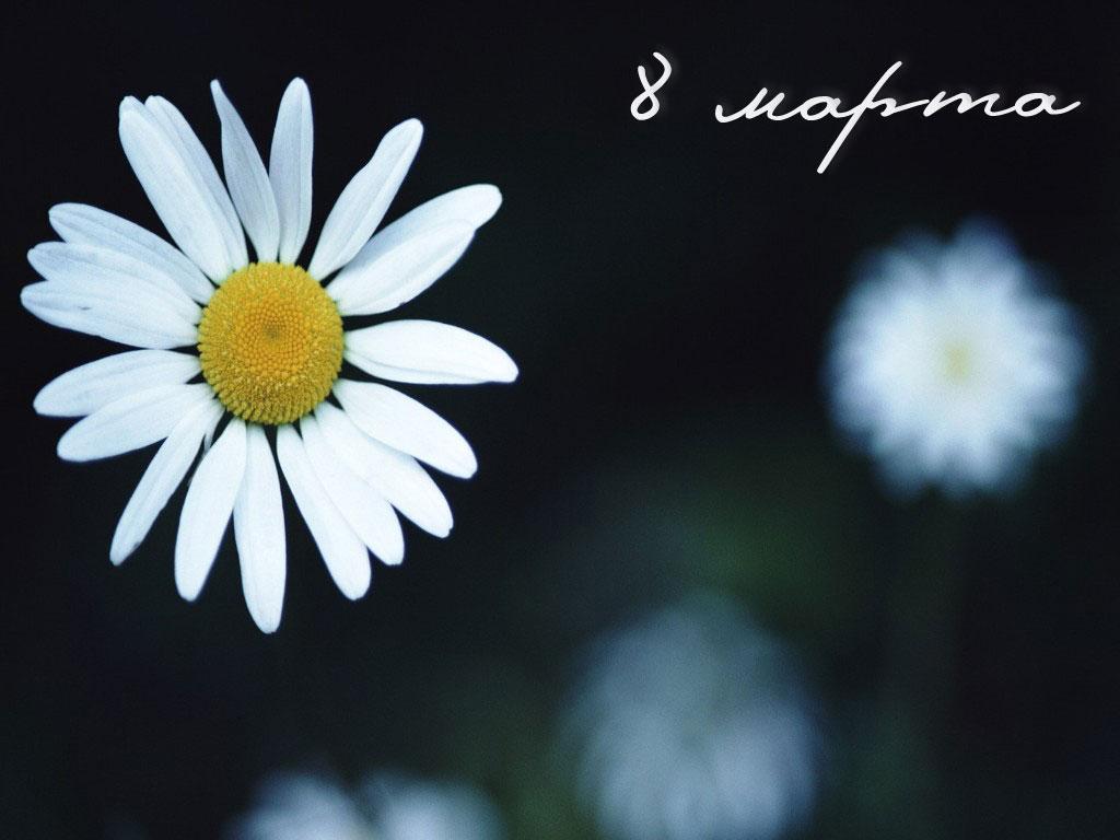Popular  Download International Women39s Day PowerPoint Backgrounds  PPT Garden