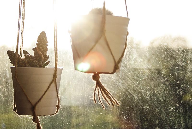 Macrame cactus planter