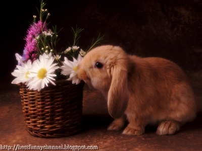 Rabbit sniffs flowers.