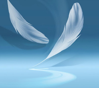 Feather Wallpapers Collections