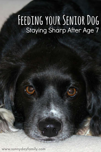 When your dog turns 7, he's now a senior. Feed his mind as well as his body to help him stay sharp and active.
