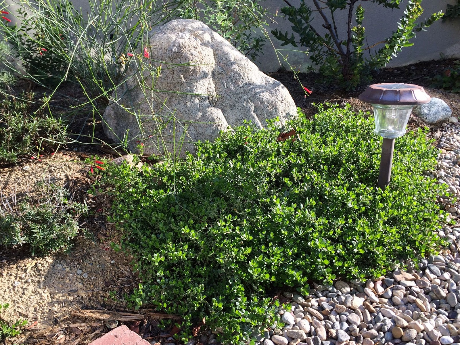 CA Native Garden February 2015