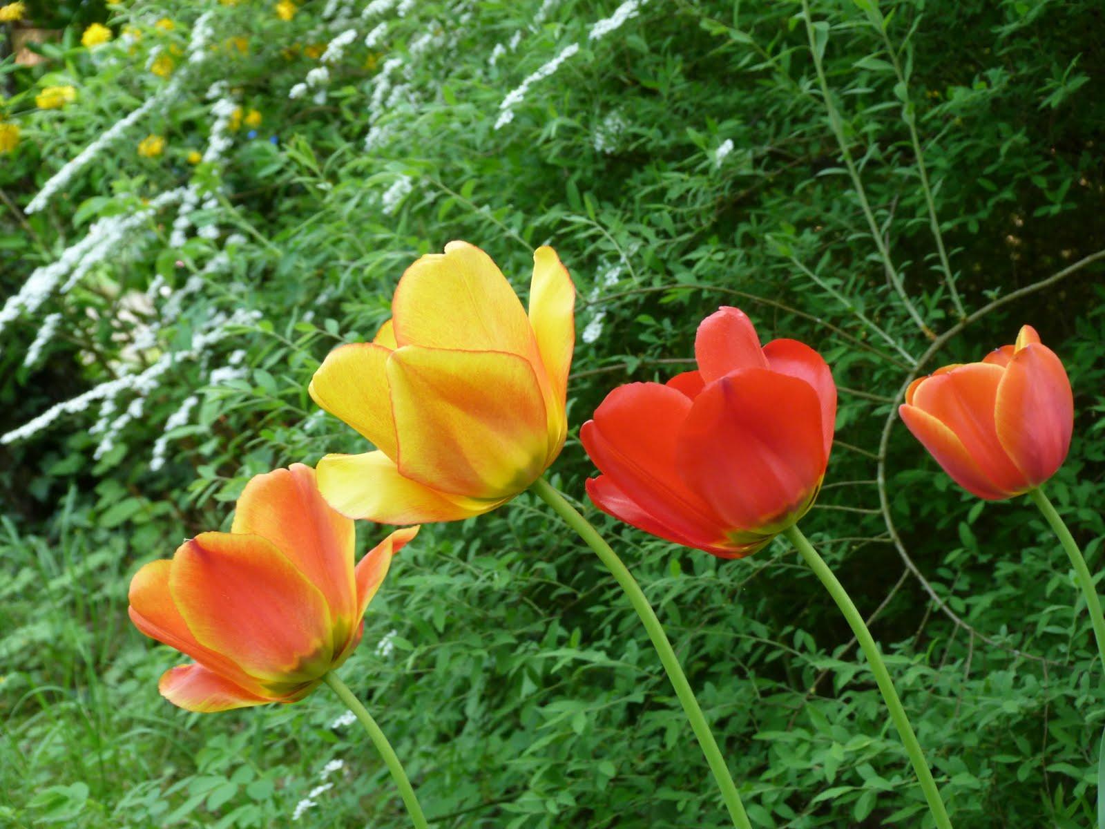 Gartenverbandelt fr hlingsbeete for Eisenkugel deko
