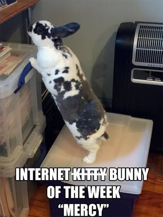 INTERNET BUNNY OF THE WEEK!