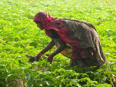 Reisen in Indien, Bodhgaya