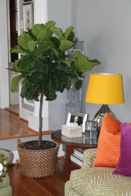 Fiddle Leaf Fig, Bright Home Design, Living Room, Bright Pillows, In House Greendery, Pretty Living Room, Bright Lamp Shades, Mercury Glass Lamps, World Market Lamps and Pillows, Home Goods Orange Pillows, Mrs. Howard seashell box