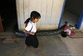 arsip-artikel-unik.blogspot.de - Astaga! Bocah Kamboja Ini Pelihara Ular Python Besar sekali