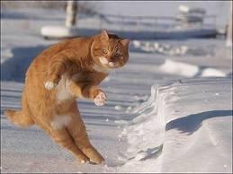 gato patinador