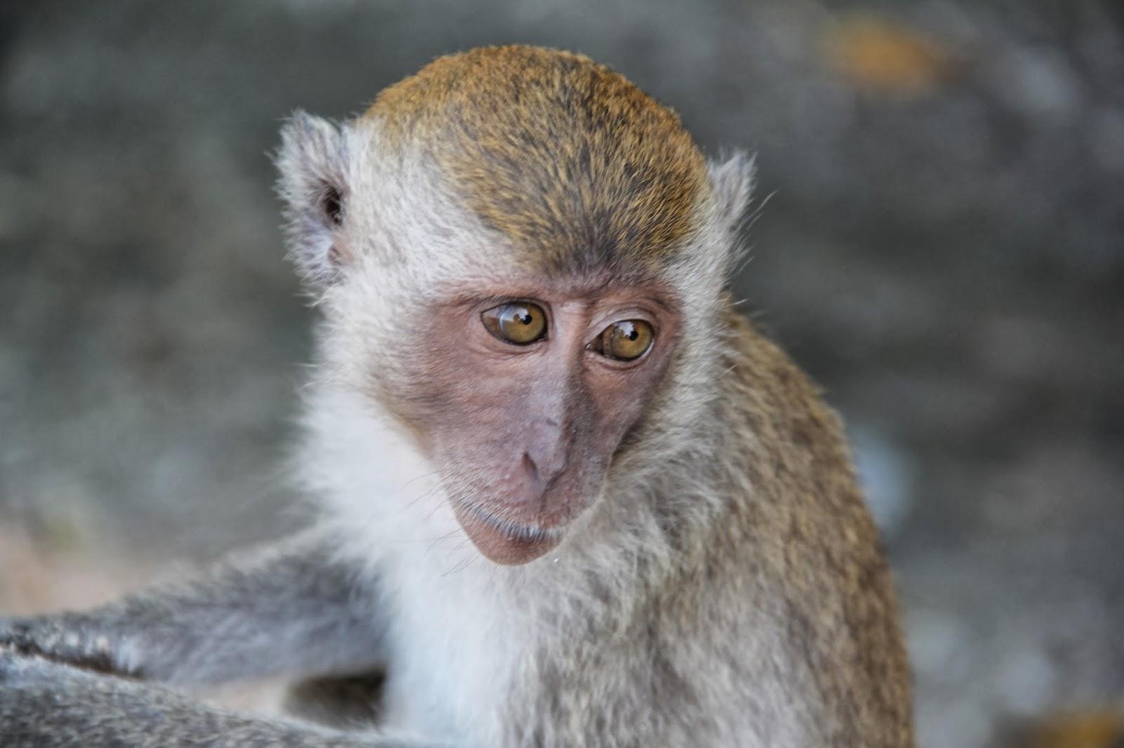 Nicobis Weltreise: Monkey Trail, Ao Nang, Krabi