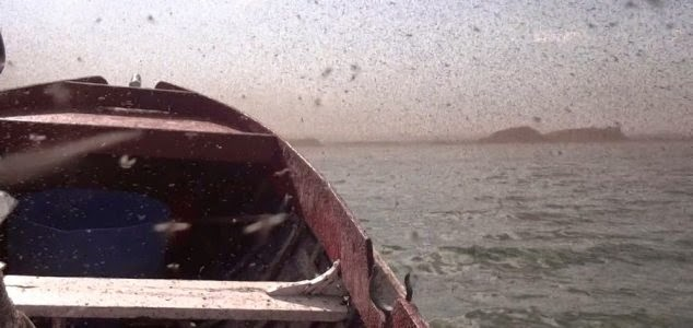 Couple Engulfed By Massive Swarm Of  Flies [VIDEO]