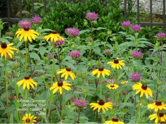 Monarda Blue Stocking by Defining Your Home Garden and Travel