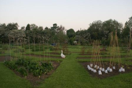 how to get to hosidius farm patch