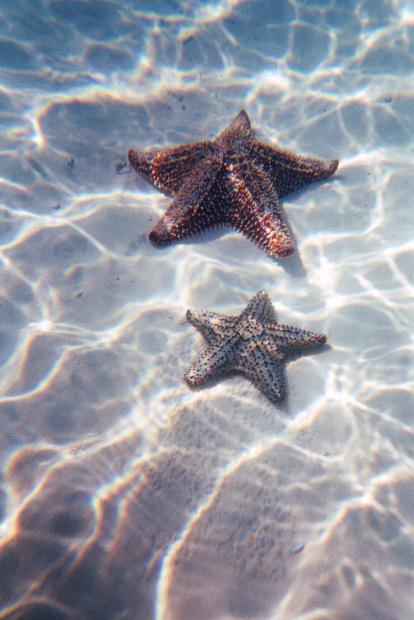 Am putea fi 2 stele...