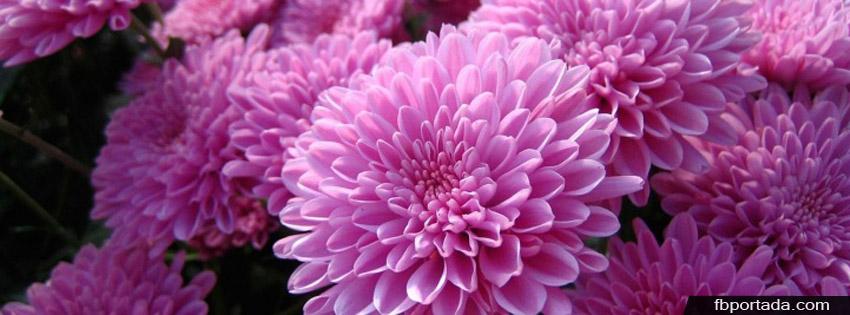 Flores Rosadas Portada para Facebook