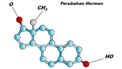 Perubahan Hormon Menyebabkan Jerawat
