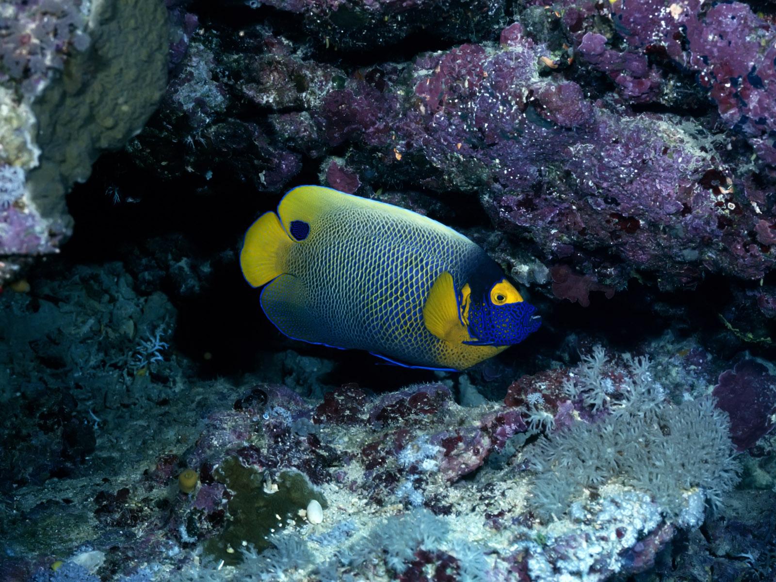 http://2.bp.blogspot.com/-u5PKCYgvbDg/Tb0paaP_QuI/AAAAAAAACFk/yh-shm1GBgs/s1600/Underwater+Wallpaper+%252845%2529.jpg
