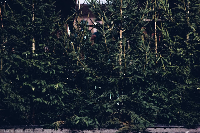 las w miescie