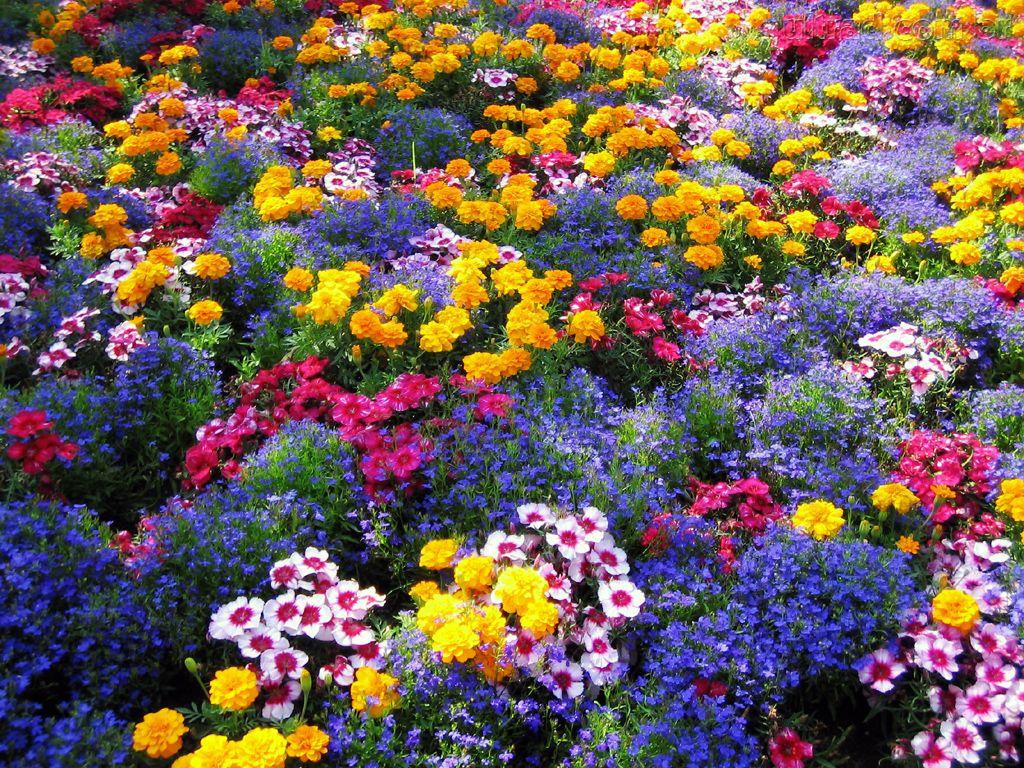 jardim vertical autocad:Para obter um jardim lindo, você deve estar sempre atento a qual