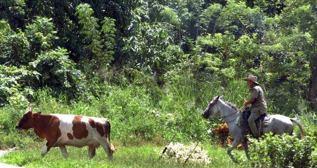 ley de reforma agraria en cuba: