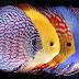 Một số mẫu hồ cá dĩa treo tường cực đẹp nên tham khảo