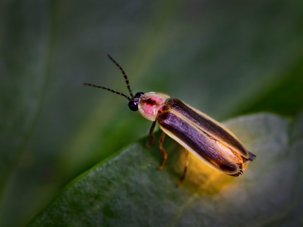 U N Insects The Gossiping Goddess:...