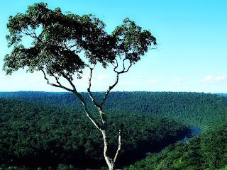 Mirante para o Rio Uruguai, em Moconá. Árvore e ferradura do rio, em meio à vegetação.