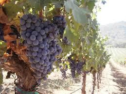 mejores vinos orgánicos