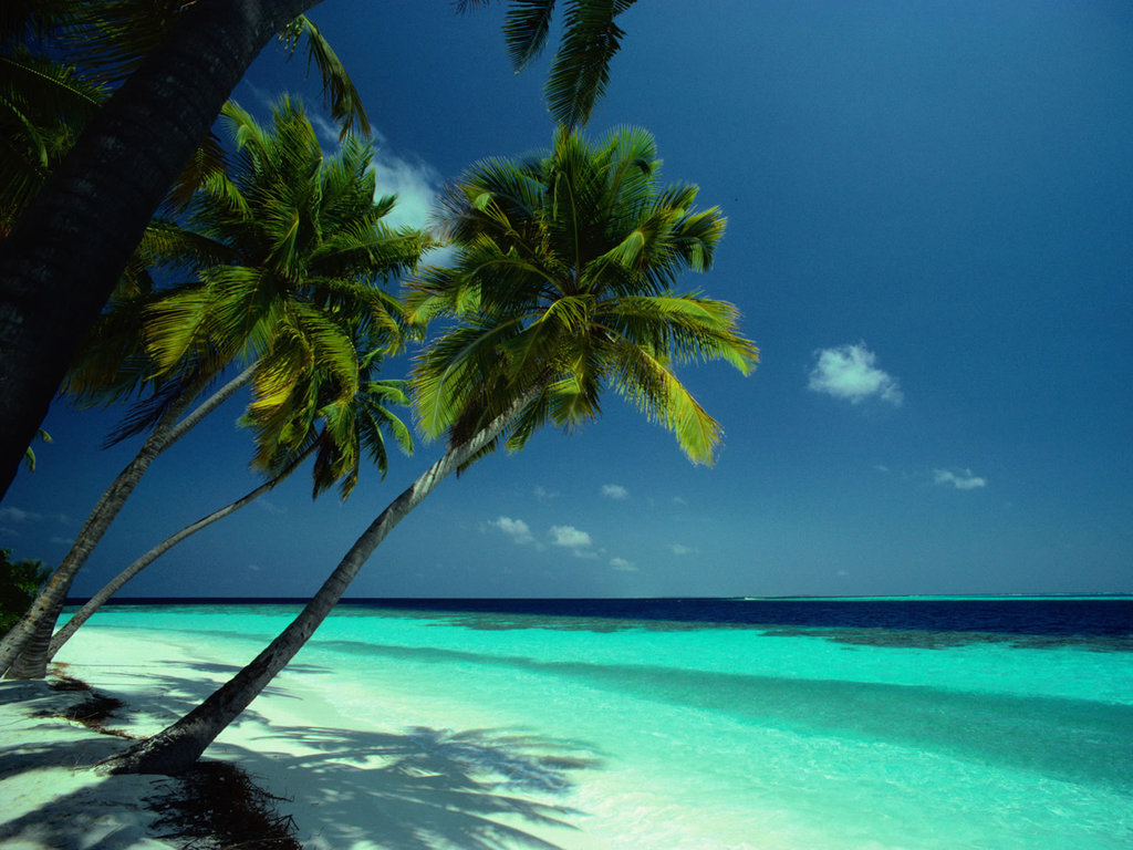 http://2.bp.blogspot.com/-u6uTMuAXvFE/TkiKb9CQfjI/AAAAAAAAKr4/n9v7-B9VUCw/s1600/Coconut%20Tress%20in%20Beach%20Wallpapers.jpg