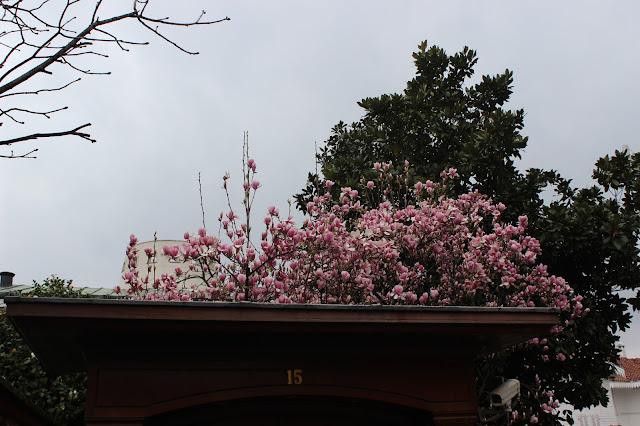 Bahar geliyor.