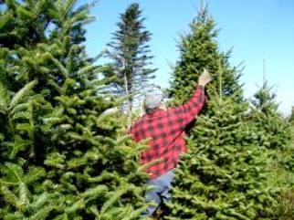 tree service irving tx